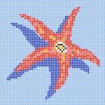 estrella-mar